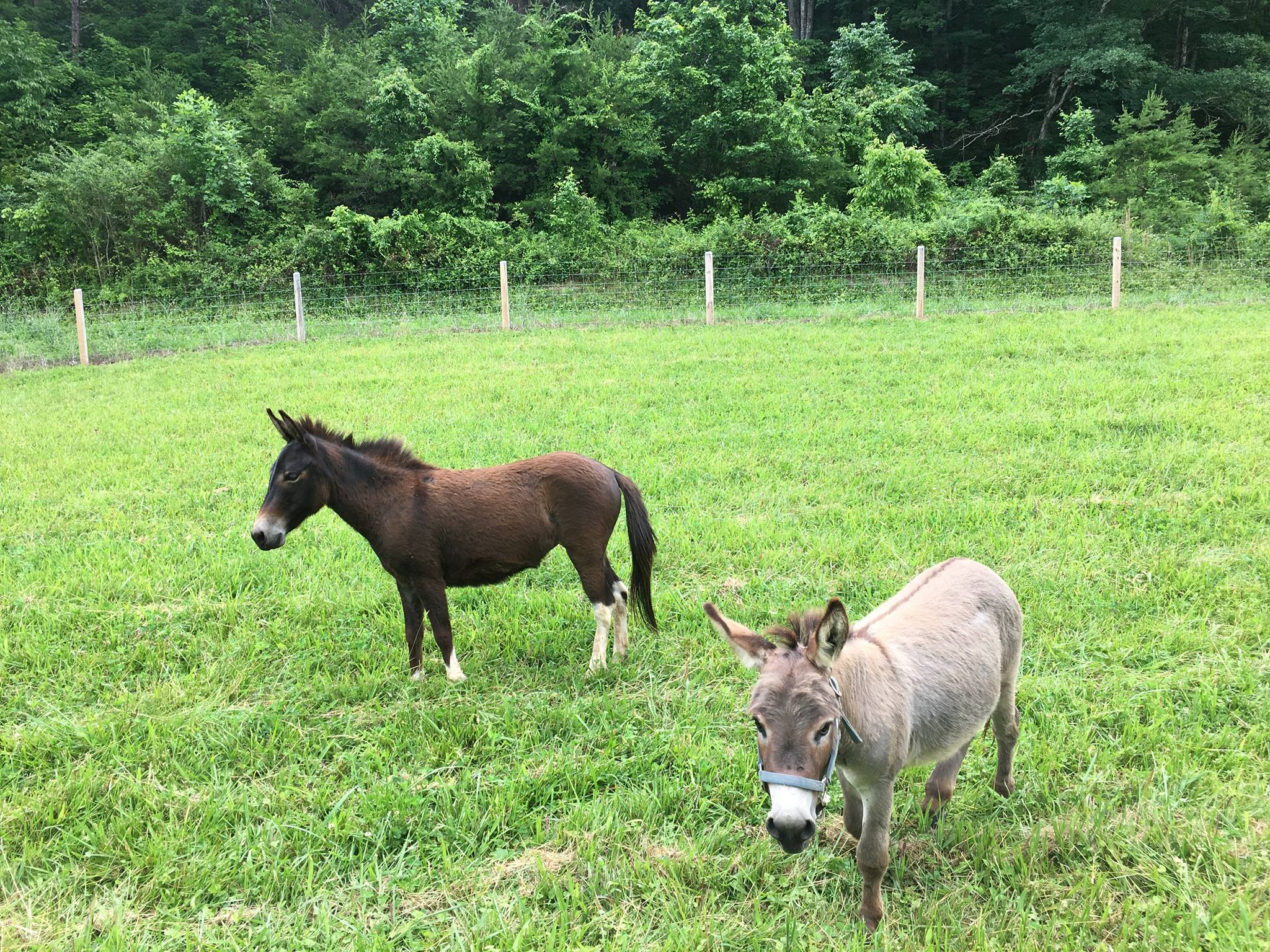 Baby Donkey In NEW HOME June 4 2017